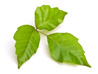 leaves-small-3